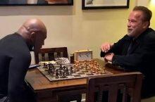 шахматы шварценеггер тайсон